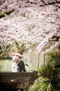Cherry blossom with Traditional Wedding Kimono