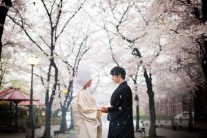 Sakura trees with Japanese couples