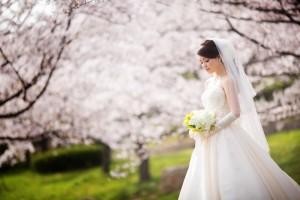 Sakura photo shooting in Kyoto