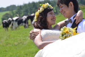Hokkaido Niseko Prewedding shooting with Dairy cattle
