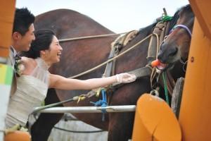 Hokkaido Niseko Prewedding play with horse