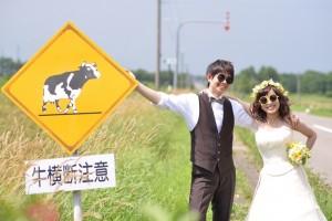 Hokkaido Niseko Prewedding shooting with cow notice banner