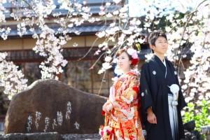 Pre weddin photo shooting in sakura