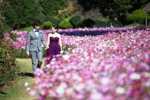Pre wedding at Nokonoshima Island