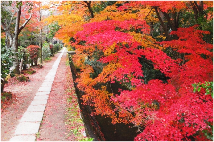 Kyoto Philosopher's path maple leaf landscape