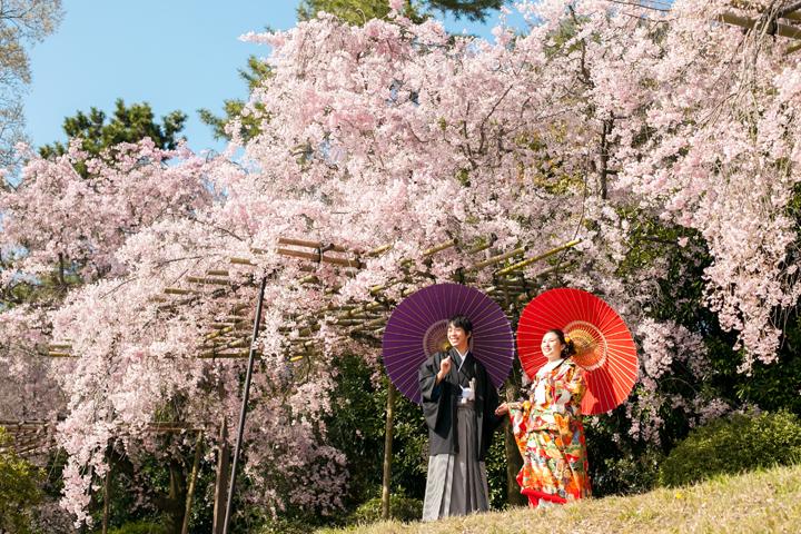 pre wedding in Sakura scene
