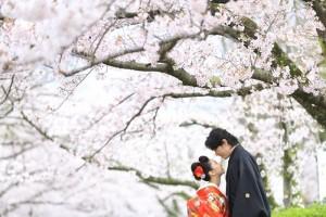 sakura scenery in Fukuoka