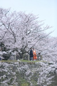 Best place for seeing sakura in Fukuoka
