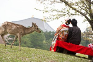Beautiful landscape provided by Nara prefecture