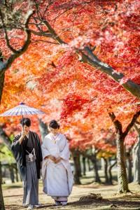 Seasonal landscape in Nara prefecture