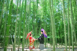 taking wedding photo in bamboo forest