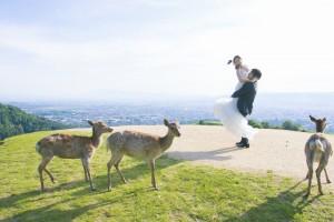 Nara Mountain Wakakusa