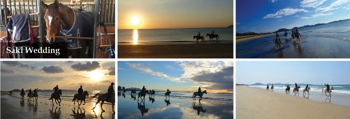horse riding in sunset landscape