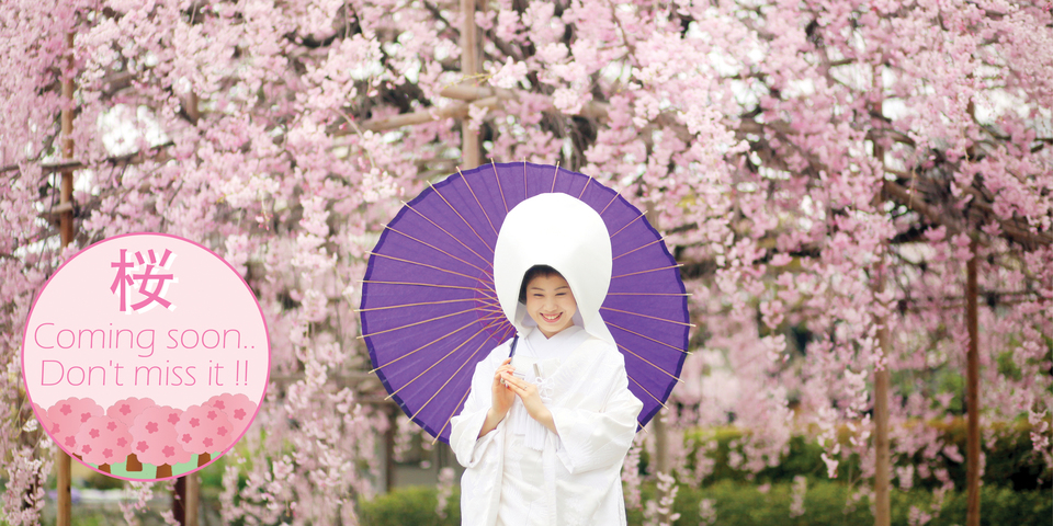 Wear Kimono and hang out to enjoy cherry blossom