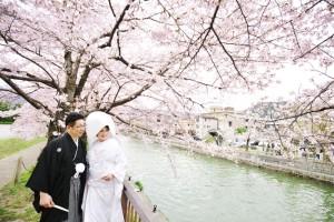The best season of sakura in Kyoto
