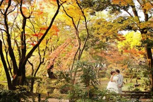 couple is surrounded by yellow leaves