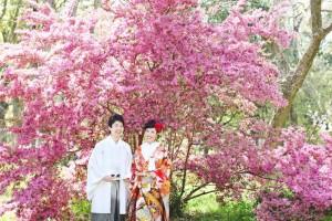 Under big cherry blossom tree
