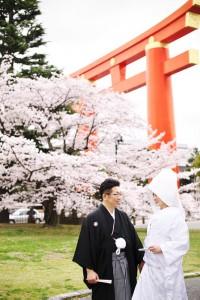 Sakura blooms at shrine