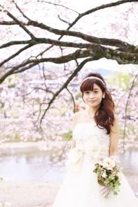 sakura scenery