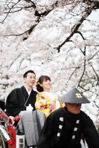 Jinrikisha in sakura scenery