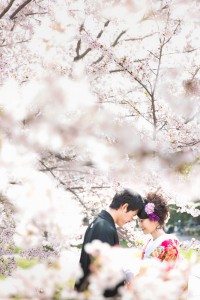 we swear forever love under the cherry blossom