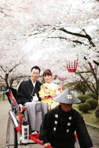 Jinrikisha goes under trees of sakura