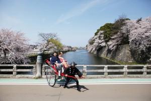 sakura scene of Hikone city