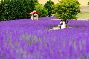 Most popular season in Hokkaido