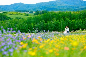 Furano offers vivid color scenery