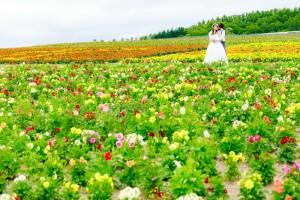 Hokkaido's landscape