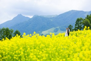 Yellow flower and green mountain