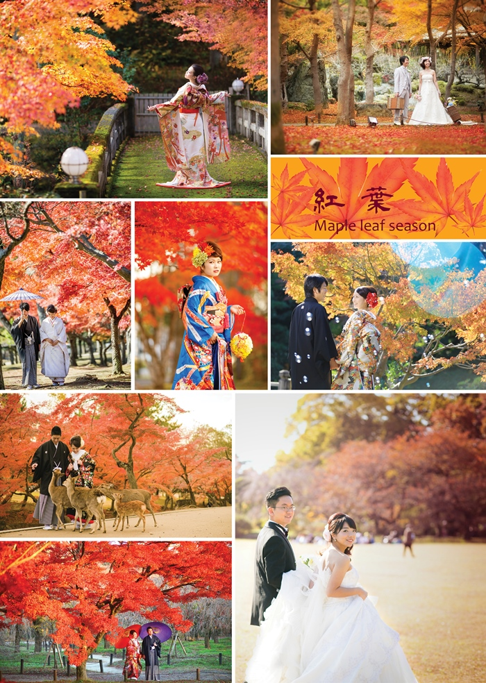 Hope you enjoy photo shooting in maple leaf landscape
