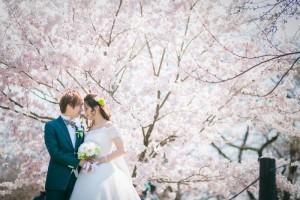 Feeling forever love in sakura scenery