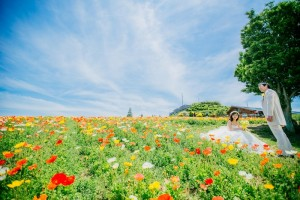 vivid color flower field
