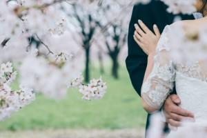 Sakura scenery in Japanese spring