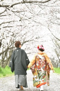 Walking under the sakura tree arch