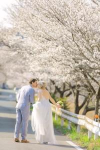 Fully cherry blossom