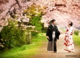 pre wedding in cherry blossom at Kyoto by atelier Casha