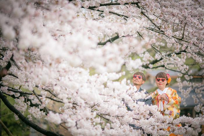 Sakura landscape in Kyoto