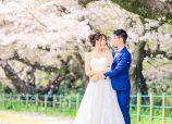 Sakura of Maizuru park Fukuoka