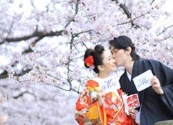 sakura scene in Fukuoka