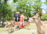 Seasonable landscape of Nara
