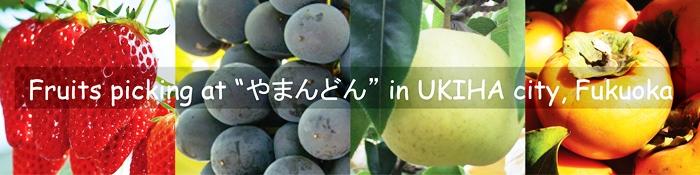 fruits picking in Fukuoka