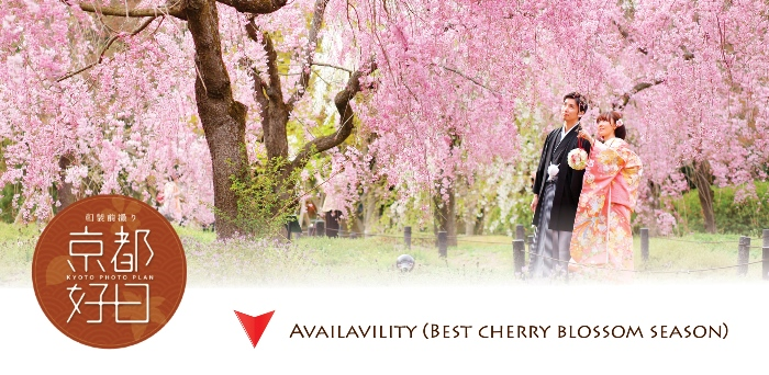 pre wedding in sakura scene