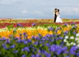 Vast flower garden