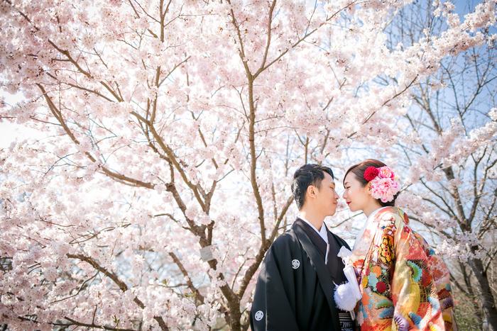 Sakura in Kyoto botanical garden