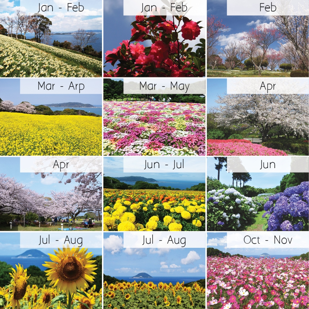 check which flower you will see there