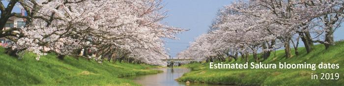Estimated Sakura blooming dates in 2019